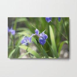 Longwood Gardens - Spring Series 234 Metal Print