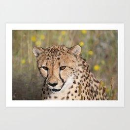 Cheeta Head looking Art Print
