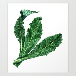Lacinato Kale Art Print