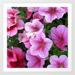 Vibrant Pink and Red Petunia Flowers Art Print