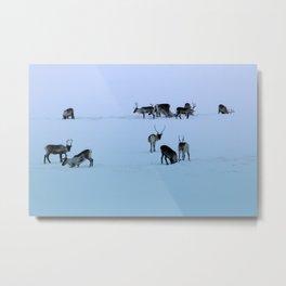 Reindeers Metal Print