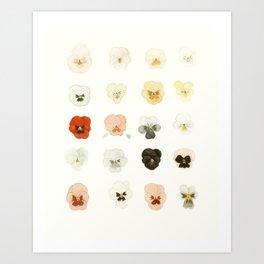 A Taxonomy of Pansies Art Print