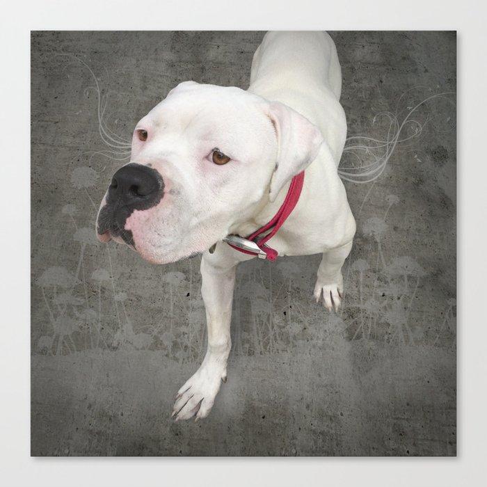 TSUKi (shelter pup) Canvas Print