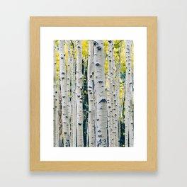 Aspen Forest Tree Bark Framed Art Print