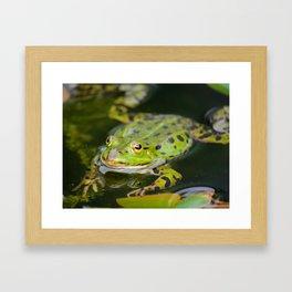 Green European Frog Framed Art Print