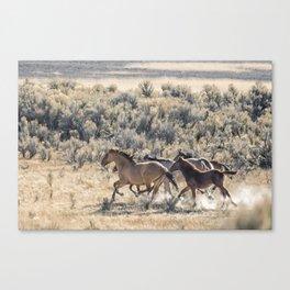 Running Mustangs, No. 1 Canvas Print