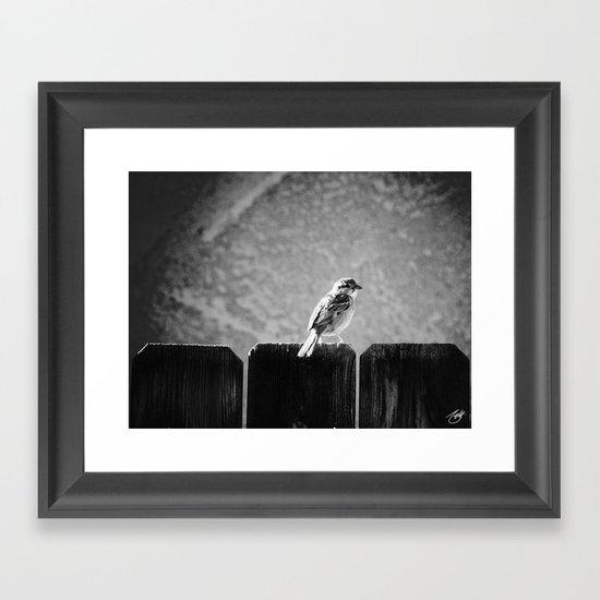 Sparrow BW Framed Art Print
