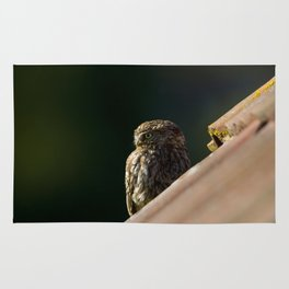 LITTLE OWL WATCHING OUT Rug