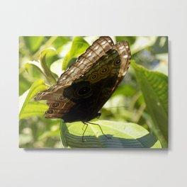 butterfly bathing in the sunlight Metal Print