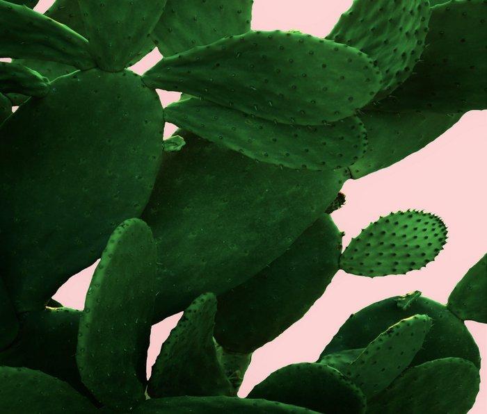 Cactus On Pink Metal Travel Mug