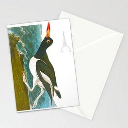 Pied oyster-catcher Bird Stationery Cards