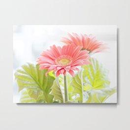 Gerber Daisies Flower Metal Print