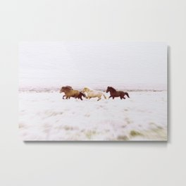WILD AND FREE 5 - HORSES OF ICELAND Metal Print
