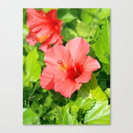 Floral collection. Hibiscus Canvas Print