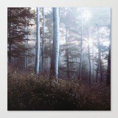 Forest Trees Sunrise Canvas Print