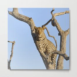 The Leopard - The Look Metal Print