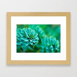 Green Succulent Mandala Framed Art Print