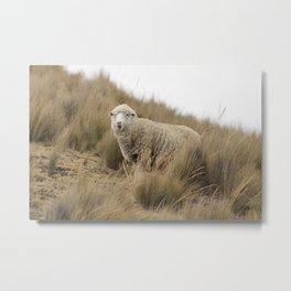 sheep in Peru Metal Print