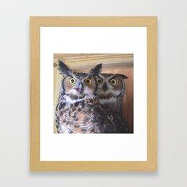Great Horned Owls Framed Art Print