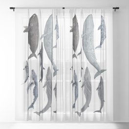 Whales and right whale Sheer Curtain