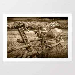 Texas Longhorn Steer by an Old Wooden Fence in Sepia Tone Art Print