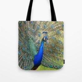 peacock during mating season Tote Bag