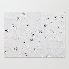 Little star on sand... Canvas Print