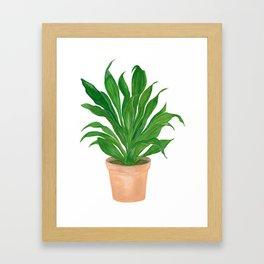Dracaena Framed Art Print