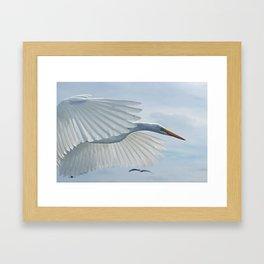 Flying Egret Framed Art Print
