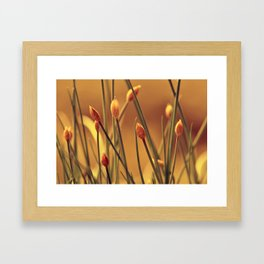 Allium 175 Framed Art Print