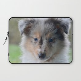 Blue-eyed Portrait of a Shetland Sheepdog Puppy Laptop Sleeve