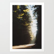 In Redwoods Art Print