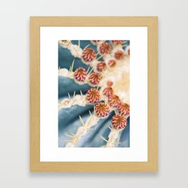 Barrel Cactus Blooms Framed Art Print