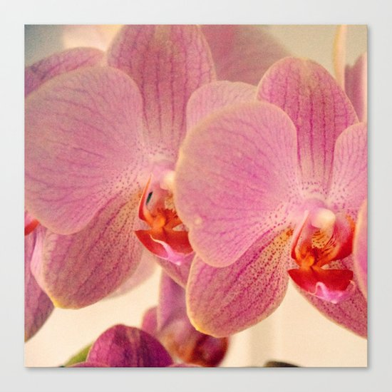 Triplet pink orchids  Canvas Print
