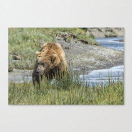 Brown Bear After His Dip Canvas Print