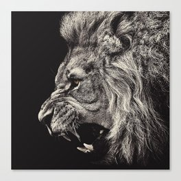Angry Male Lion Canvas Print