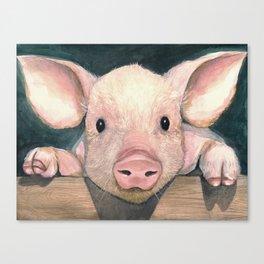 Pig Face Canvas Print