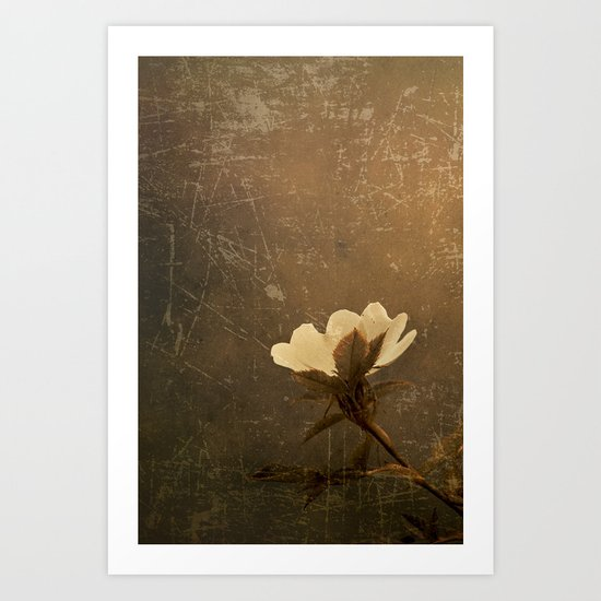 Wild Old Rose Art Print