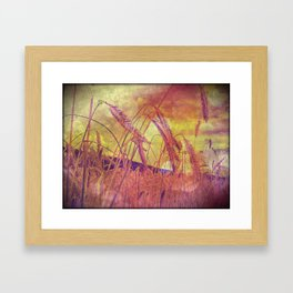 Pink And Gold Wheat Framed Art Print
