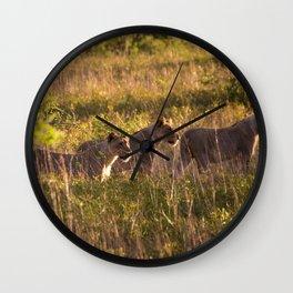Lions at Tembe elephant park Wall Clock