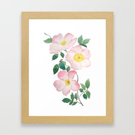 pink rosa rubiginosa watercolor Framed Art Print