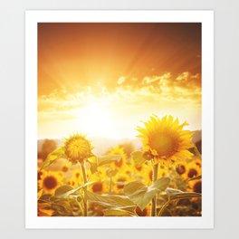 majestic sunflower field Art Print