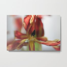 Tulip - final stages Metal Print