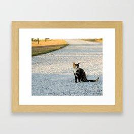 Kountry Kitty Framed Art Print