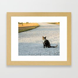 Kountry Kitty Framed Art Print