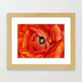Orange Buttercup Abstract Framed Art Print