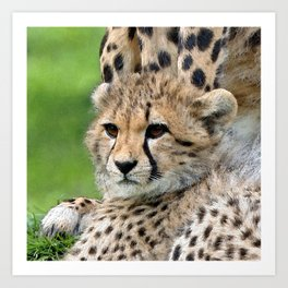 Aqua_Cheetah_20180101_by_JAMColorsSpecial Art Print
