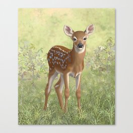 Cute Whitetail Deer Fawn Canvas Print
