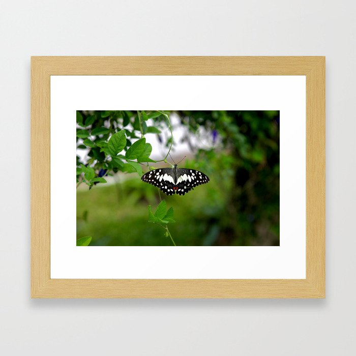 Butterfly Small Framed Art Print