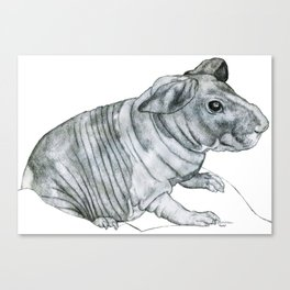 Naked Wrinkly Piggie Canvas Print